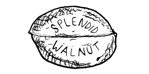 horrible-logos-splendid-walnut